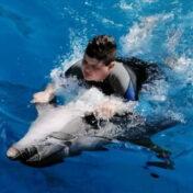 Toník a delfíni